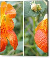 Jewelweed Flower In Stereo Canvas Print