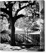 Jfk-the Stockade Fence-dealy Plaza Canvas Print