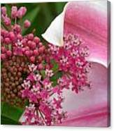 Asclepias And Friend Canvas Print