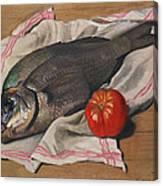 John Dory Canvas Print