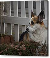 Johnny By The Fence Canvas Print