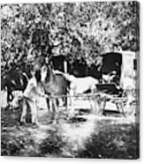Johnston Horse Wagon Canvas Print