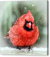 Jolly Old ....... Cardinal  Canvas Print
