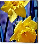 Jonquil Watercolor Canvas Print