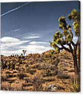Joshua Tree 15 Canvas Print