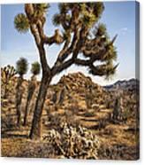 Joshua Tree 16 Canvas Print