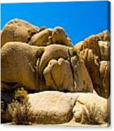 Joshua Tree 29 Canvas Print