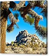 Joshua Tree And Jumbo Rocks By Quail Springs In Joshua Tree Np-ca Canvas Print