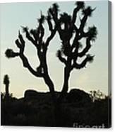 Joshua Tree At Sundown Canvas Print