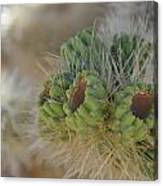 Joshua Tree Cholla Cactus Canvas Print