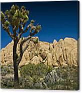 Joshua Tree In Joshua Tree National Park No. 323 Canvas Print