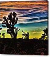 Joshua Trees In Cima Valley Canvas Print