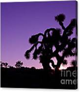 Joshua Trees Canvas Print