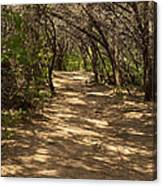 Journey Through The Cedars Canvas Print