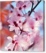 Joy Of Spring. Pink Spring In Amsterdam Canvas Print