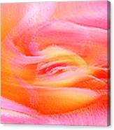 Joy - Rose Canvas Print