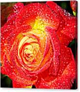 Joyful Rose Canvas Print