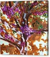 Judas Tree Jerusalem Canvas Print