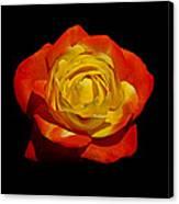 Judy Garland Rose Canvas Print