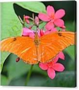 Julia Butterfly Canvas Print