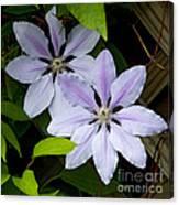 Julia's Bouquet   #6321 Canvas Print