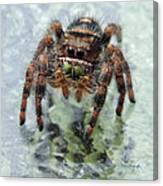 Jumper Spider 4 Canvas Print