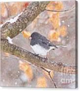Junco In Snow Canvas Print