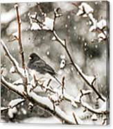 Junco In The Snow Canvas Print