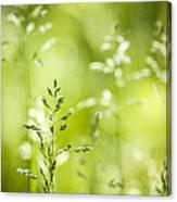 June Green Grass Flowering Canvas Print