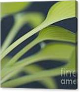 June Plantain Lily Close Ups Canvas Print