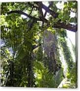 Jungle Canopy Canvas Print