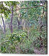Jungle Forest In Chitwan Np-nepal Canvas Print