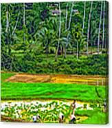Jungle Homestead Paint Version Canvas Print