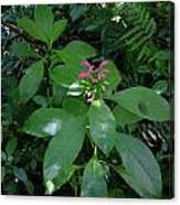 jungle in La Amistad National Park Panama 4 Canvas Print