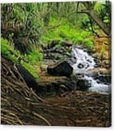 Jungle Stream Kauai Canvas Print