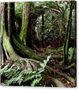 Jungle Trunks3 Canvas Print