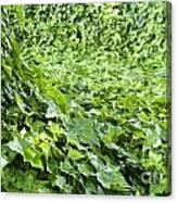 Jungle Vines Canvas Print