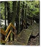Jungle Walkway Canvas Print
