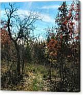 Junglescape4 2009 Canvas Print