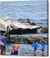 Junior Lifeguards And Sea Lions Canvas Print