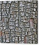 Juniper Bark- Texture Collection Canvas Print