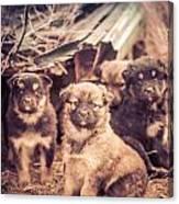 Junkyard Dogs Canvas Print