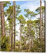 Ancient Looking Florida Forest At Aubudon Corkscrew Swamp Sanctuary Canvas Print
