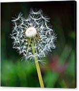 Just A Dandy Canvas Print