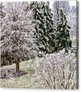 Ice Coating Trees And Lawn In A Back Yard Canvas Print