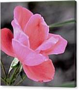 Just A Touch Of Color Canvas Print
