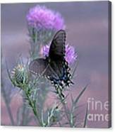 Just Fluttering By Canvas Print