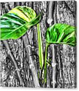Just Green 2 By Diana Sainz Canvas Print