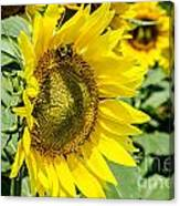 Just Me And The Bumblebee Canvas Print