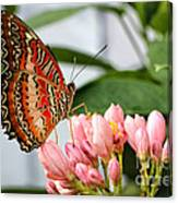 Just Pink Butterfly Canvas Print